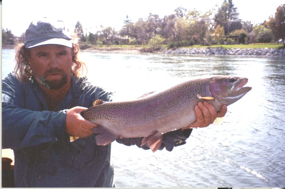 "Lower Sacramento Fly Fishing 30"" Rainbow Trout"